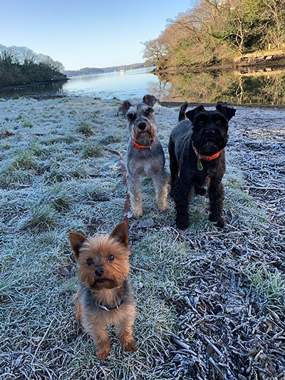 three dogs cold day
